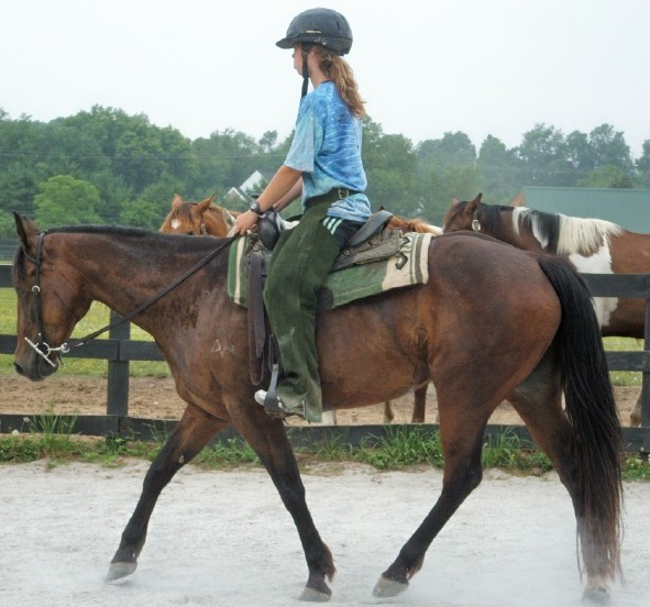Riding Horses For Sale