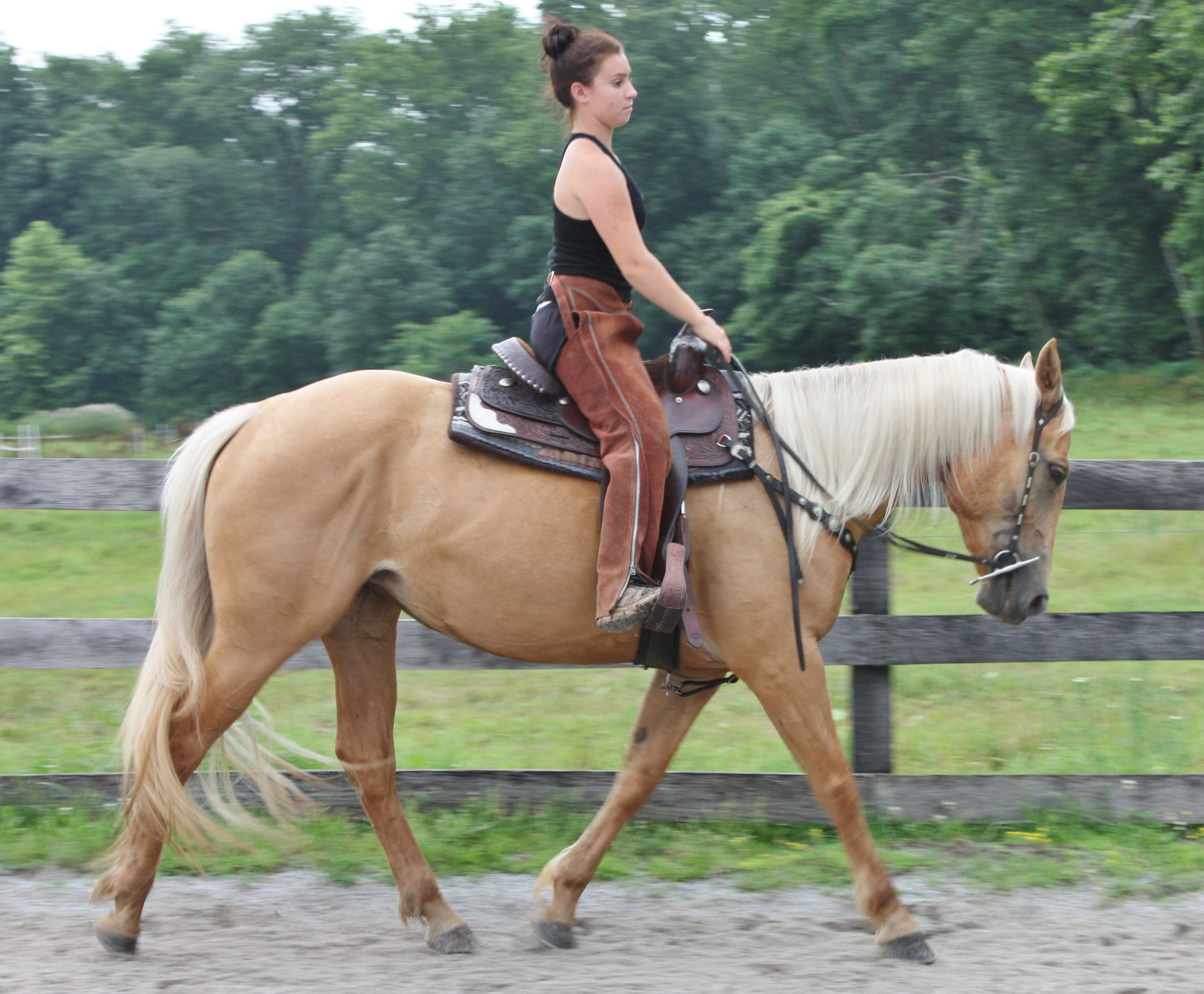 Riding Horses For Sale In Pennsylvania